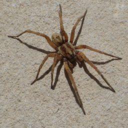 Уничтожение пауков в Нягани